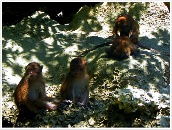 Thailand - Phang Nga Bay Monkeys