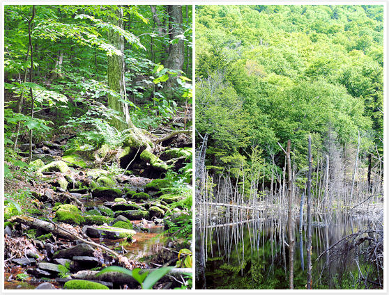 Catskill - Pecoy Notch Trail