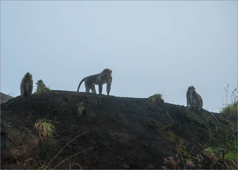 Monkeys at the summit