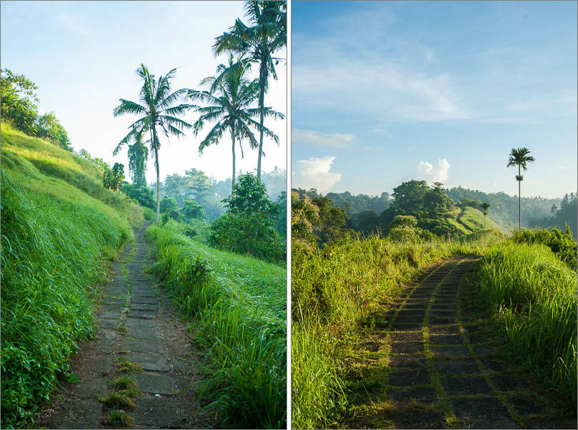 Ubud - Campuhan Ridge Walk - Morning