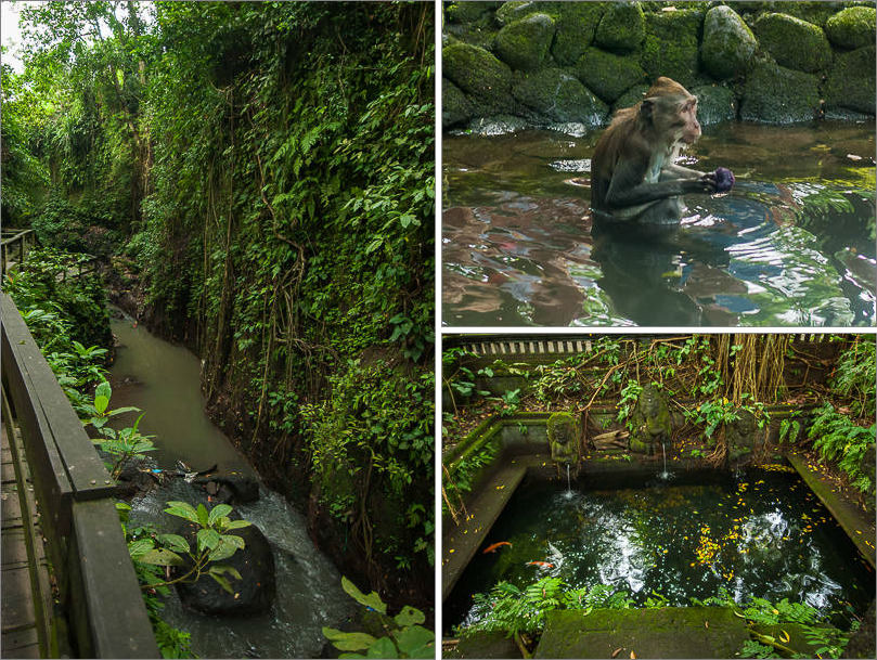 Ubud - Monkey Forest - Water