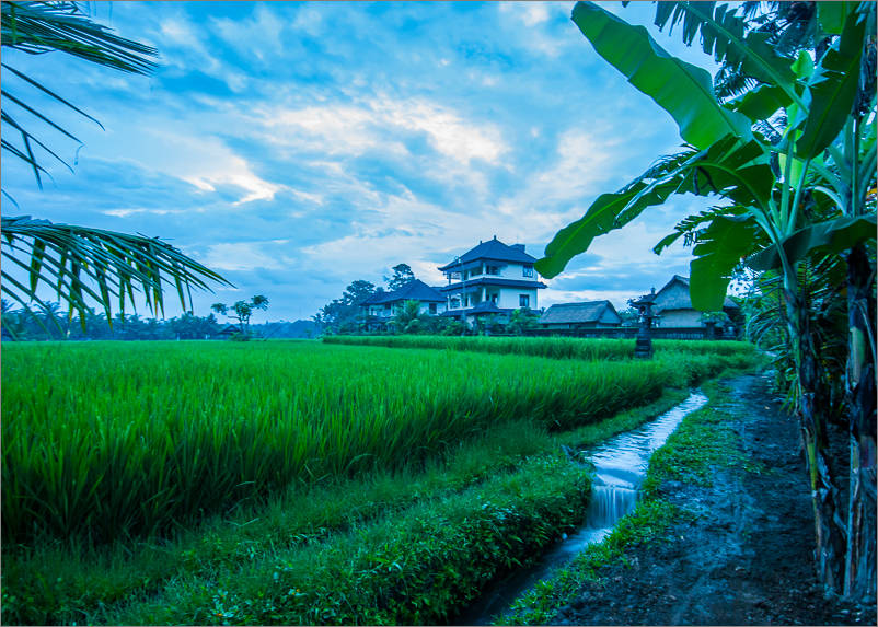 Ubud - Rice paddies at dawn