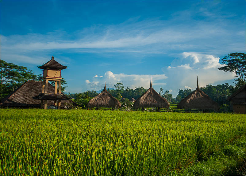 Ubud - Surrounding rice paddies