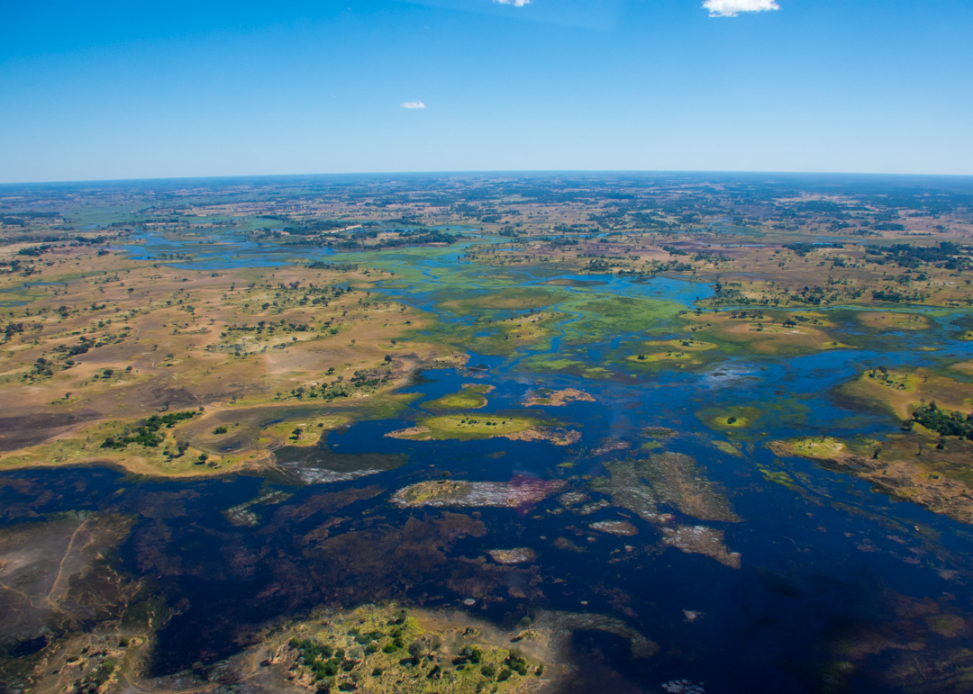 Blue Or Green Water Safari In The Okavango Delta